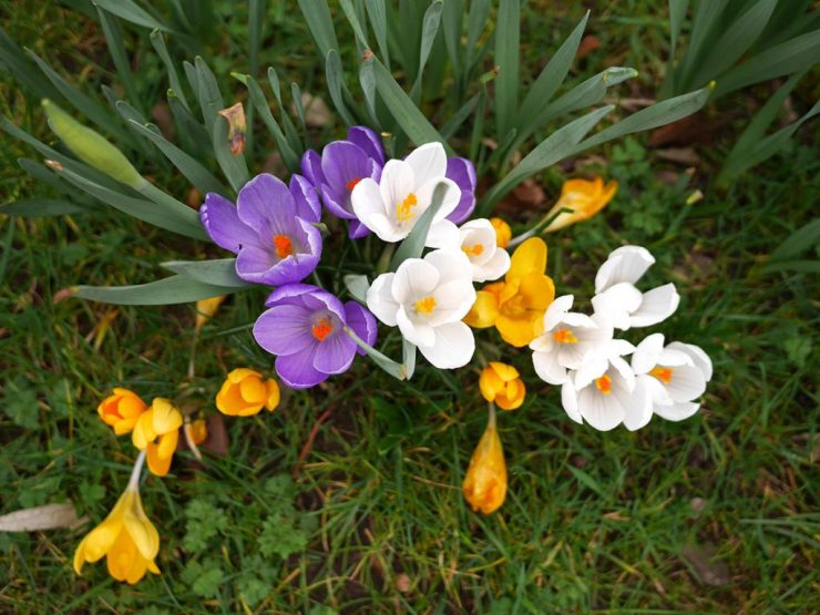 This image has an empty alt attribute; its file name is crocuses-2-1024x769-1.jpg